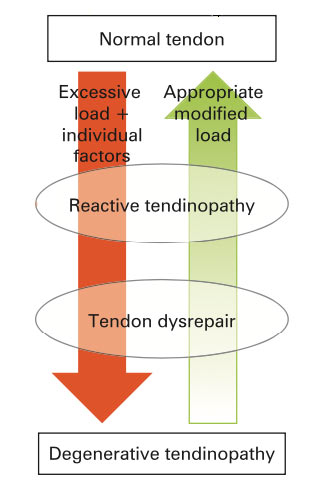 adaptation of the tendon continuum