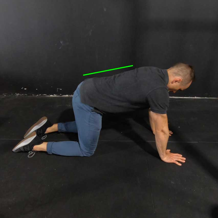 quadruped pelvic tilt exercise