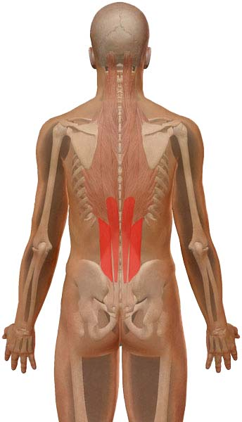 lumbar strain pain referral